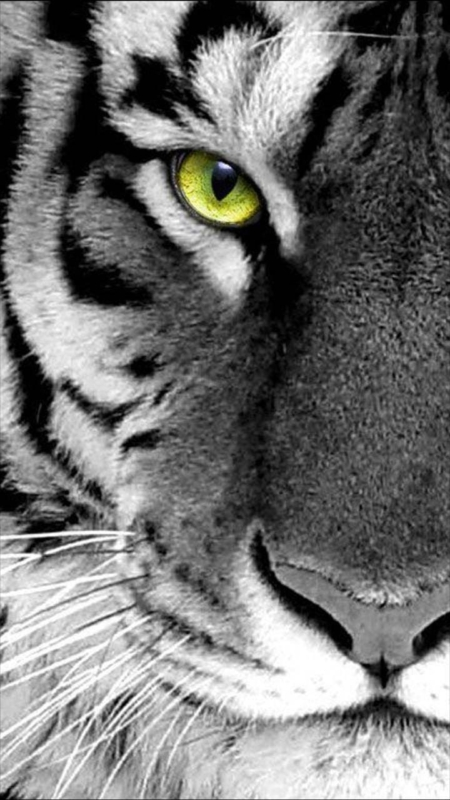 Animals Phone Wallpaper. Free Download for iPhones and Androids